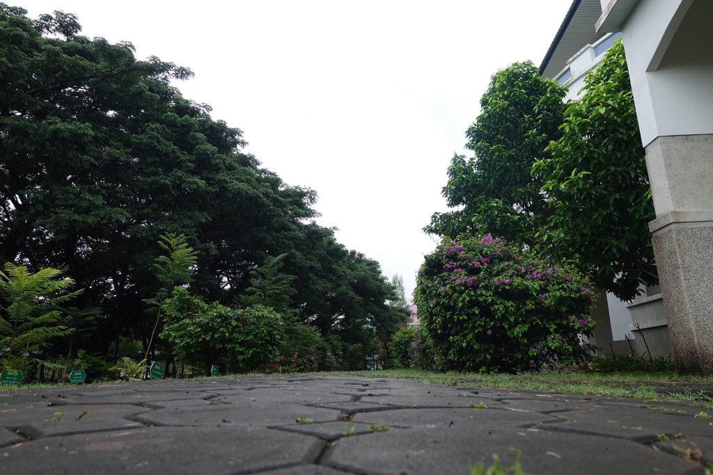 校园的一条小路