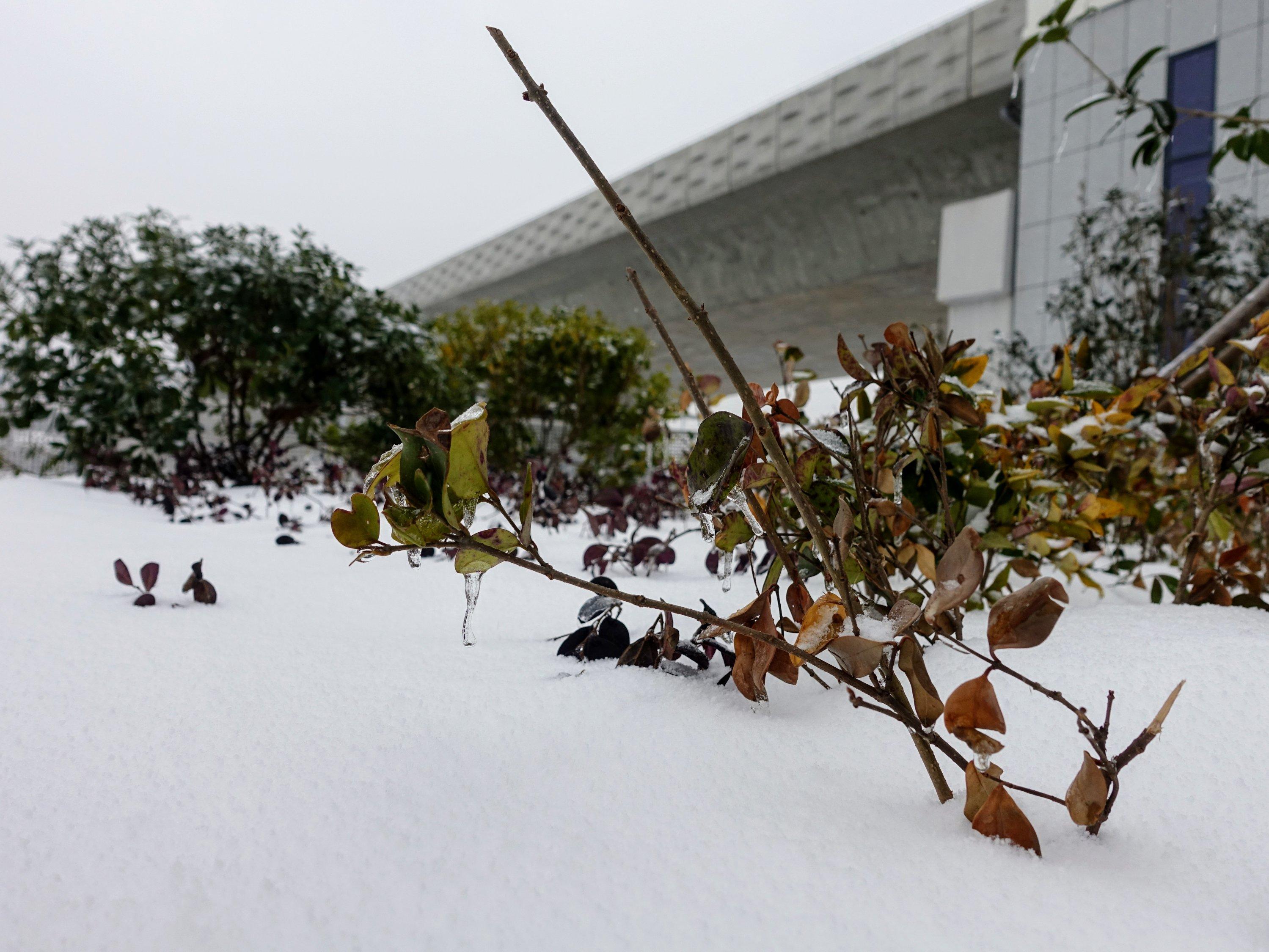 这片雪有个不太好的背景,总之是那么回事